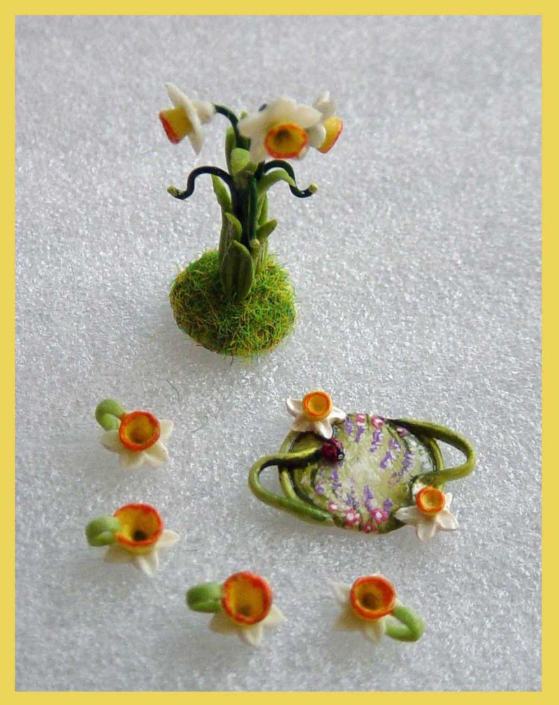 Daffodil set2