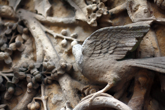 Central-park-bird