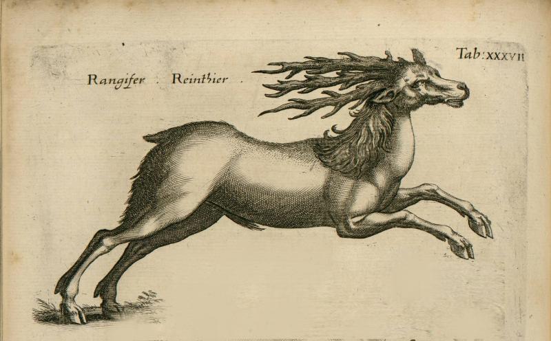 Jonston-jan-1650-historiae-naturalis-de-quadrupedibus-libri-impensis-haeredum-math-meriani2