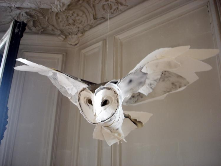 Barn_Owl_270ct09_idx53800687.jpg_mr