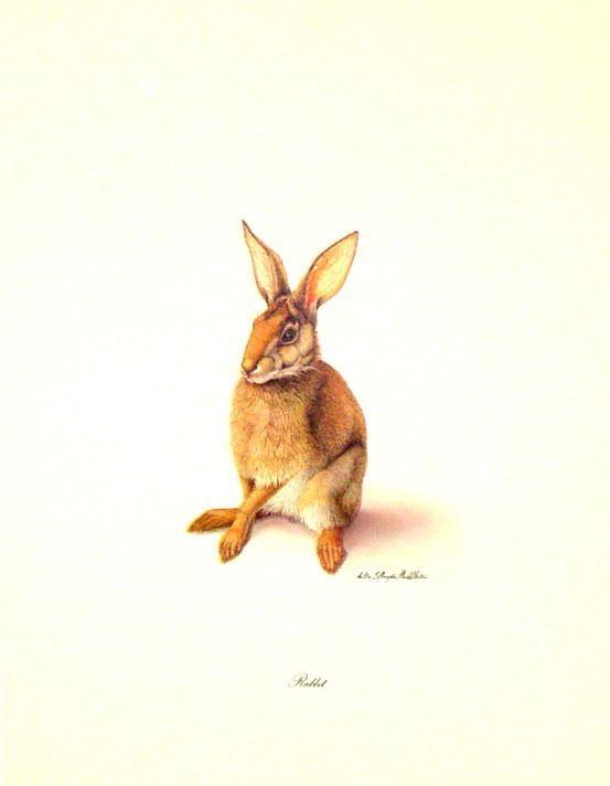 Rabbit_jpg_2