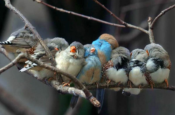 070126_birds