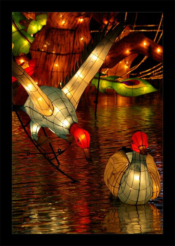 Duck_lanterns