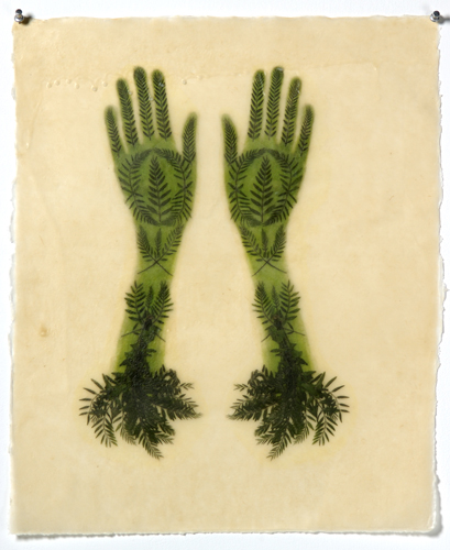 "Transformations In the artist's words, ""I begin by collecting ferns and"
